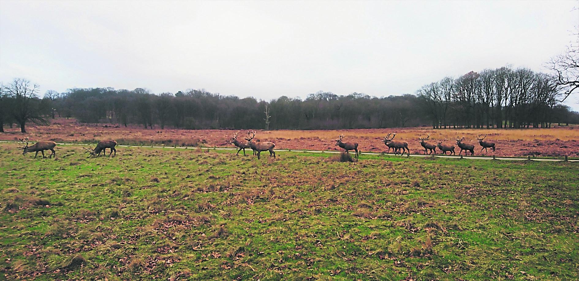 Deer on the field Photo: Vinay Kansara