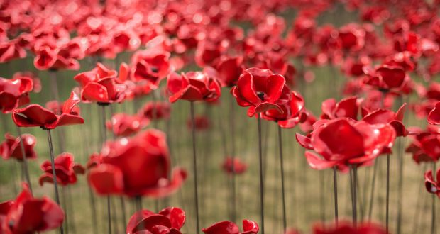 The poppy is the symbol used to commemorate the soldiers who died in war.