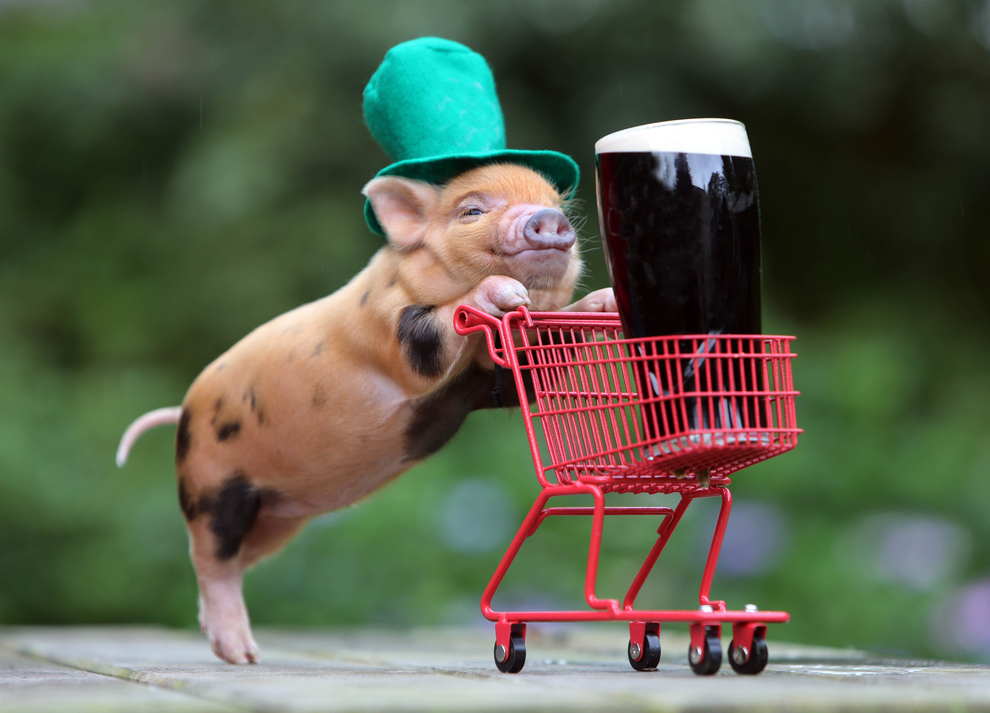 6 things you didn't know about St. Patrick's Day