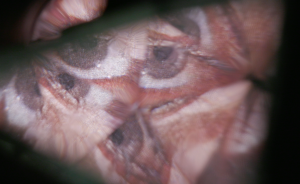 "A glimpse of Nathalia Bell's ""Fatale Fantasy"""