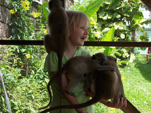 Angela playing with monkeys at St Kitts Green Sanctuary (2005) Photo: Private