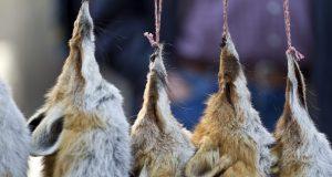 Taken at a fur market in Switzerland. Photo Credit: Rex Features