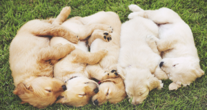 Feeling stressed out? Cuddling with a dog might help you. Photo: REX