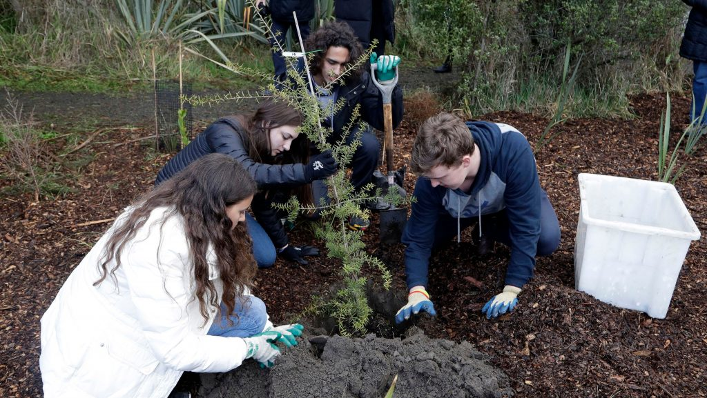 Kingston University Environmental society to help local council plant more trees