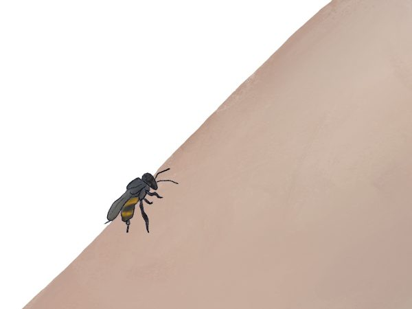 An illustration of a bee on an arm