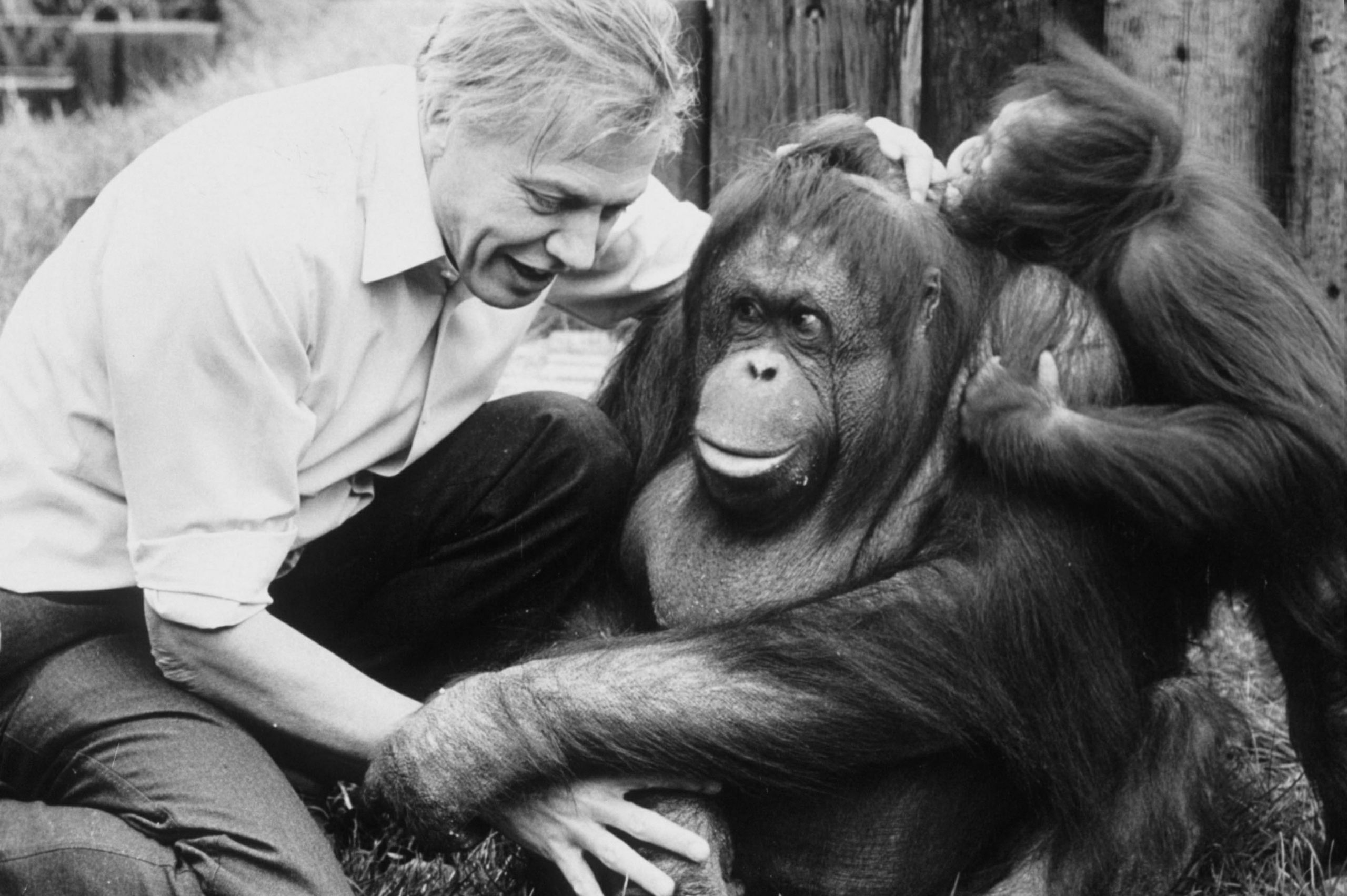 Despite cataclysmic predictions, Attenborough offers us a glimmer of hope