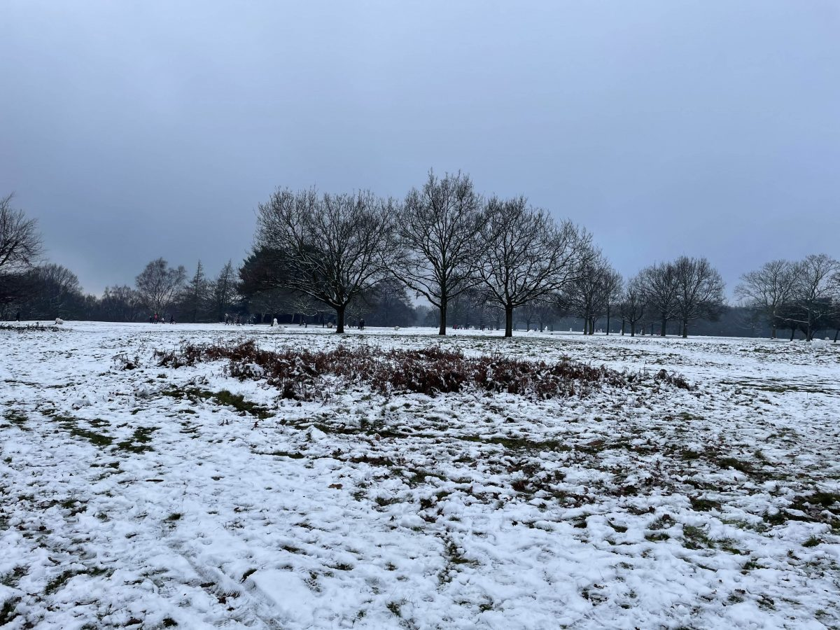 Picture of a park covered in snow